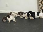 Dog Photo Gallery